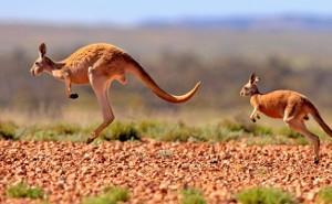 Australia & New Zealand 12 day on Noordam