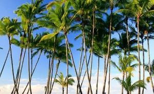 25-DAY CIRCLE HAWAII & MEXICAN RIVIERA COLLECTOR